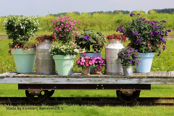 Kuipplanten | Kwekerij de Kleerkast
