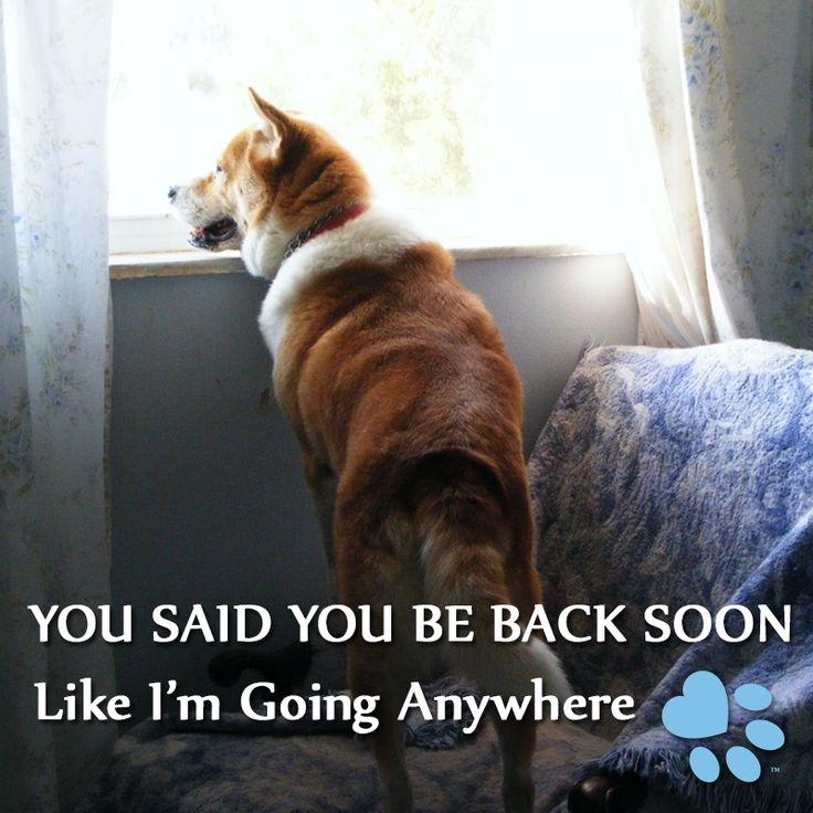 13 best dog memes images on pinterest doggies dogs and your dog my dog waits so patiently for me to get home and then worships the ground i solutioingenieria Image collections