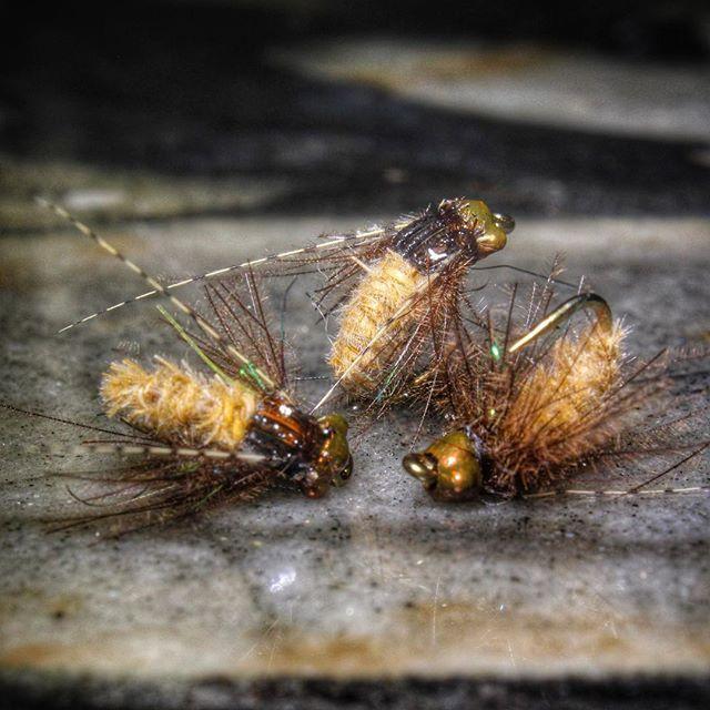 Some size 16 Table Rock Caddis. Love the @flymenfishingco caddis bead heads. #blueridgecustomflies #flytying #flytyingaddict #flytyingjunkie #flyfishing #nymphhead #troutbum