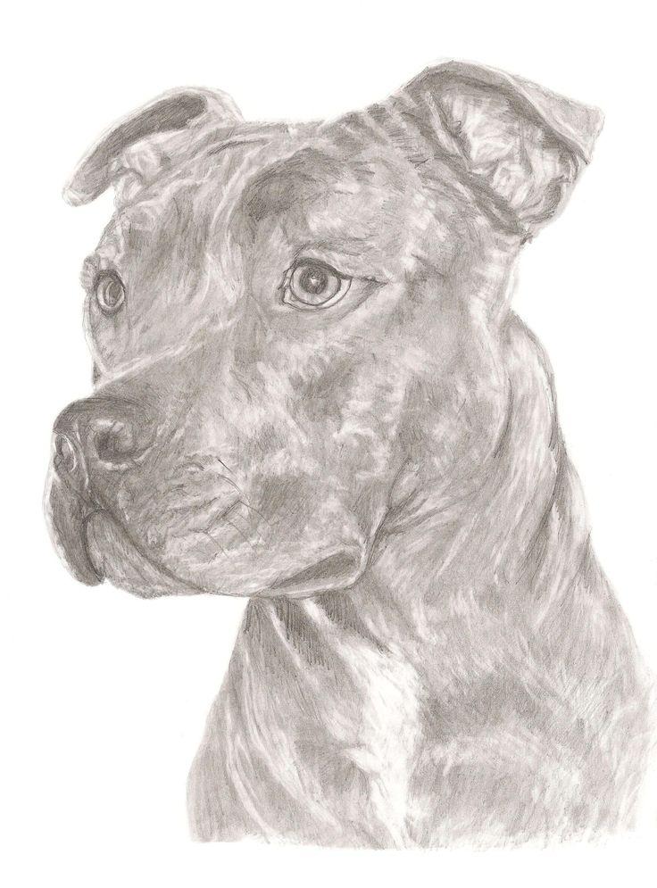 'Staffordshire Bull Terrier' print of original pencil art for sale £12