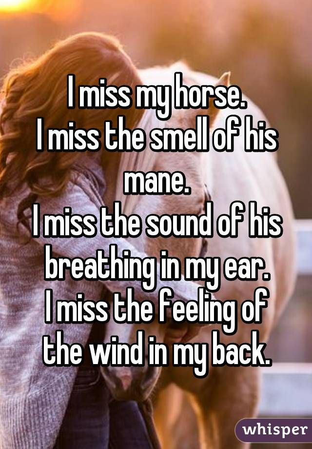 I am glad to still have my horse alive but if he did die this is how i would feel or if you had to give my horse up this is how i would feel