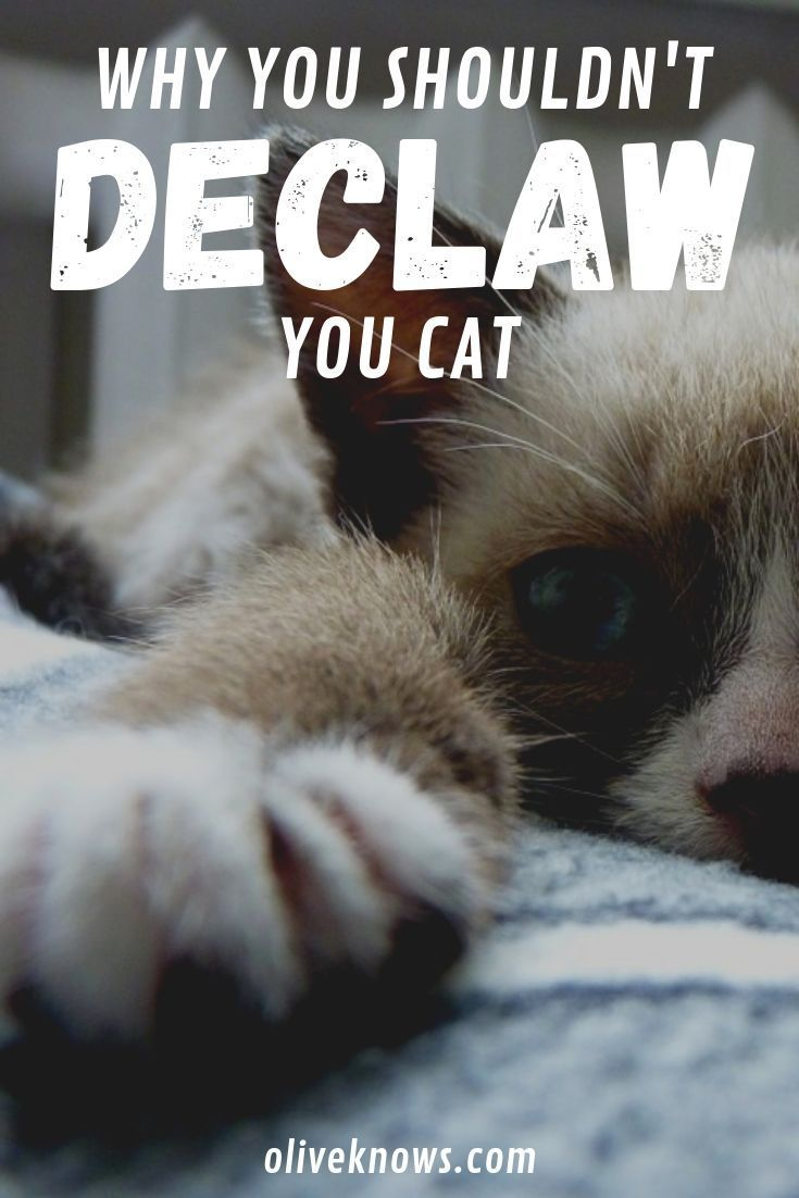 Why You Shouldn T Declaw Your Cat Oliveknows Cat Safety Declawing Cats Cat Care