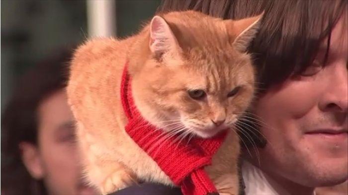 イギリスで ホームレスが助けた野良猫のおかげで立ち直る実話を元にした本で世界的に有名になった猫が死にました 15日に死んだ猫のボブは 2007年 ストリートミュージシャンのジェームズ ボウエンさんに拾われました 当時 薬物依存症で仕事もなく