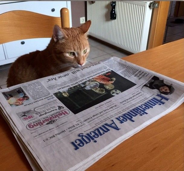 Leser zeigen ihre Haustiere - Marburg-Biedenkopf - mittelhessen.de