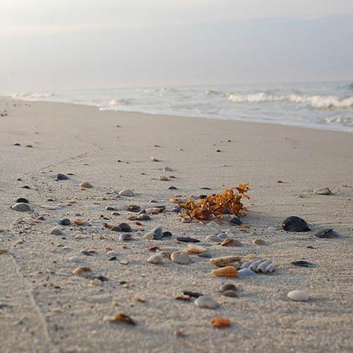 Perdido Key Fl Kayak: Seashells On Fort Morgan Beach