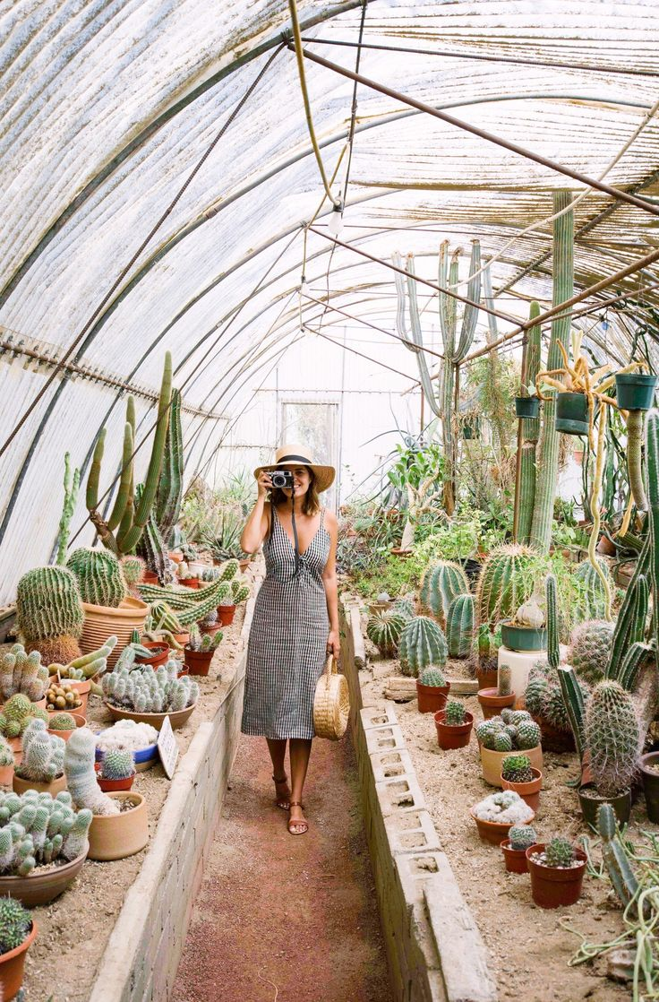 Moorten Botanical Gardens Palm Springs Guide