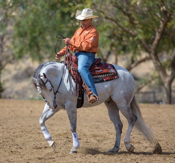 13 best Diving Horses / Sonora Webster Carver images on ...