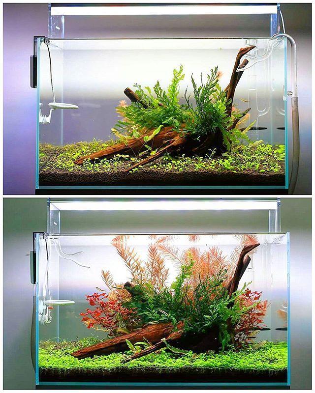 дарит театру растения для нано аквариумов фото петрова принимает