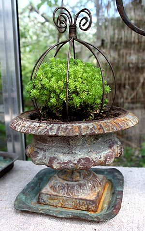 Old urn, wrought iron topiary, green instead of floral color. Container garden.