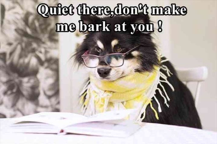 44 Funny Animal Pictures