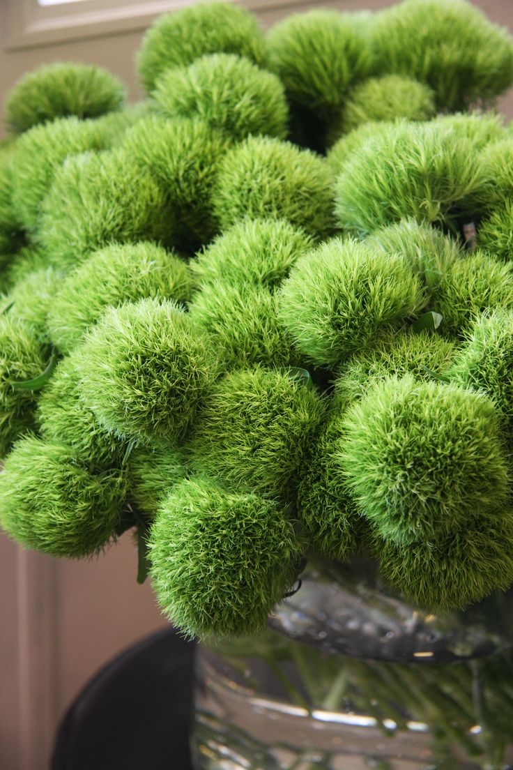 These are beautifully fresh! Dianthus 'Green truffle' by Fleurs Tremolo - http://www.fleurs-tremolo.com/ Very unique.