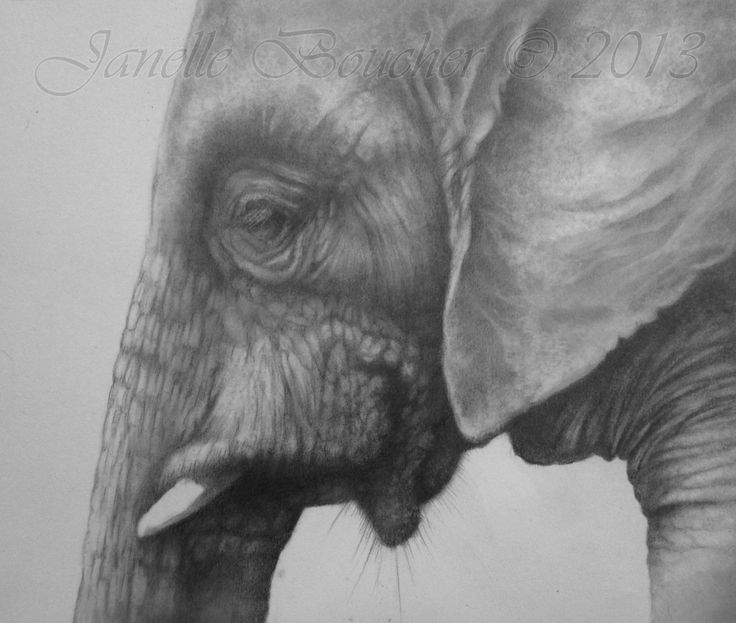 Elephant ~ Graphite , Thank you to Suzanne Saunders , Paint My Photo , for the lovely reference photo