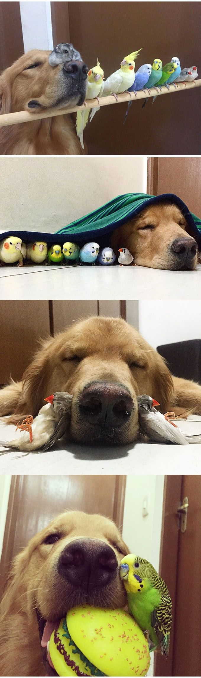 A Dog, 8 Birds And A Hamster Are The Most Unusual Best Friends Ever