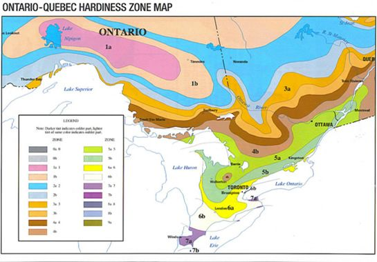 Hardiness zones for ontario quebec you can click your for Gardening zones ontario