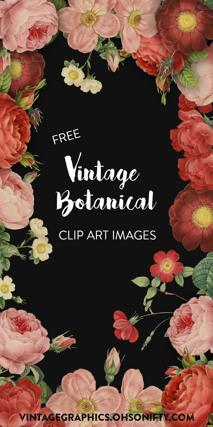 Free Clipart Images | Vintage Botanical Roses and Flowers - http://vintagegraphics.ohsonifty.com/free-clipart-images-vintage-botanical-roses-and-flowers/