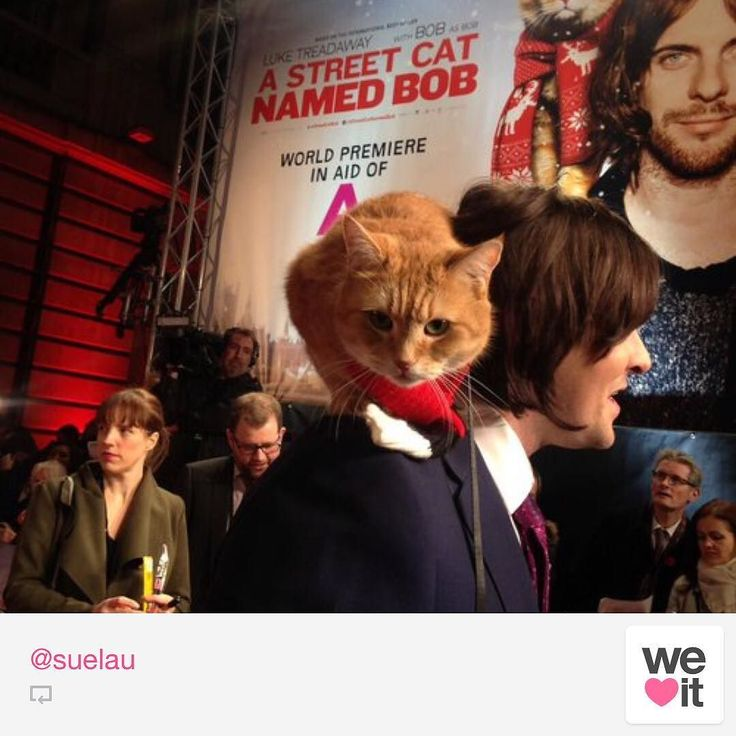A street Cat Named Bob Movie Premiere! Out November the 4th!. James & Bob on the Red Carpet!
