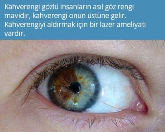 Tamam da ne gerek var  mavi gözler ışıkta çok hassas kahverengi üstünde koruyucu görevi görüyor