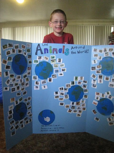 display board for animals around the world project