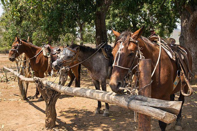 Chevaux à Trinidad (Cuba)