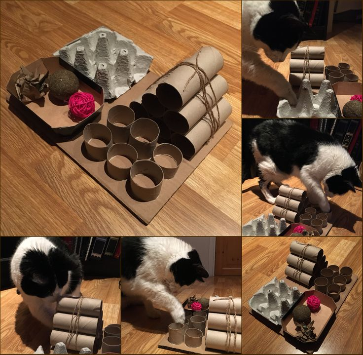 DIY Puzzle Feeder for Cats Kitty Kare Cat toys, Cat