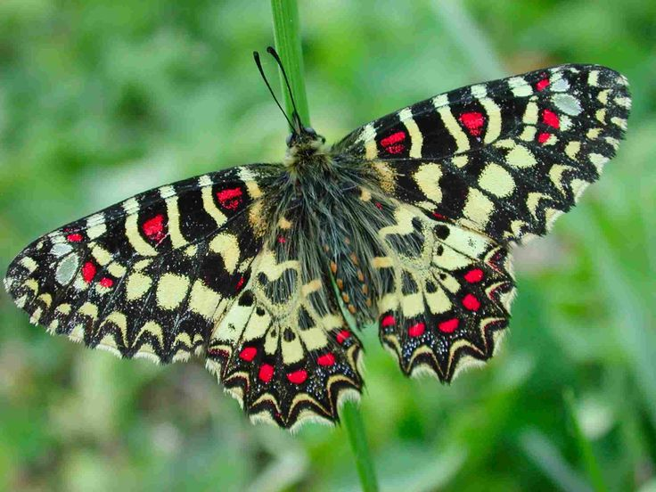 65 Best Images About I Never Saw Another Butterfly