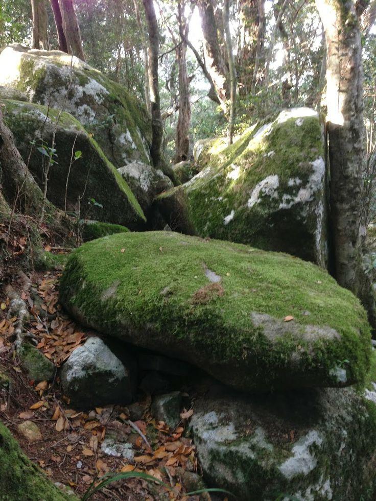 Beechmont moss