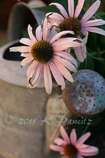 photography by Kathleen Paneitz, she is so talented and a kindred garden lover.