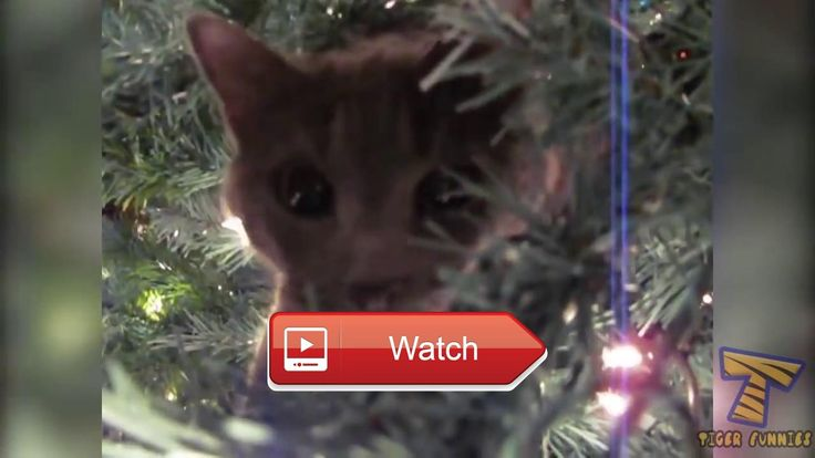 😸 Funny cat Try to stay SERIOUS The most popular CAT videos 😼 Funny cat Try to stay SERIOUS The most popular CAT videos Funny cat Try to…