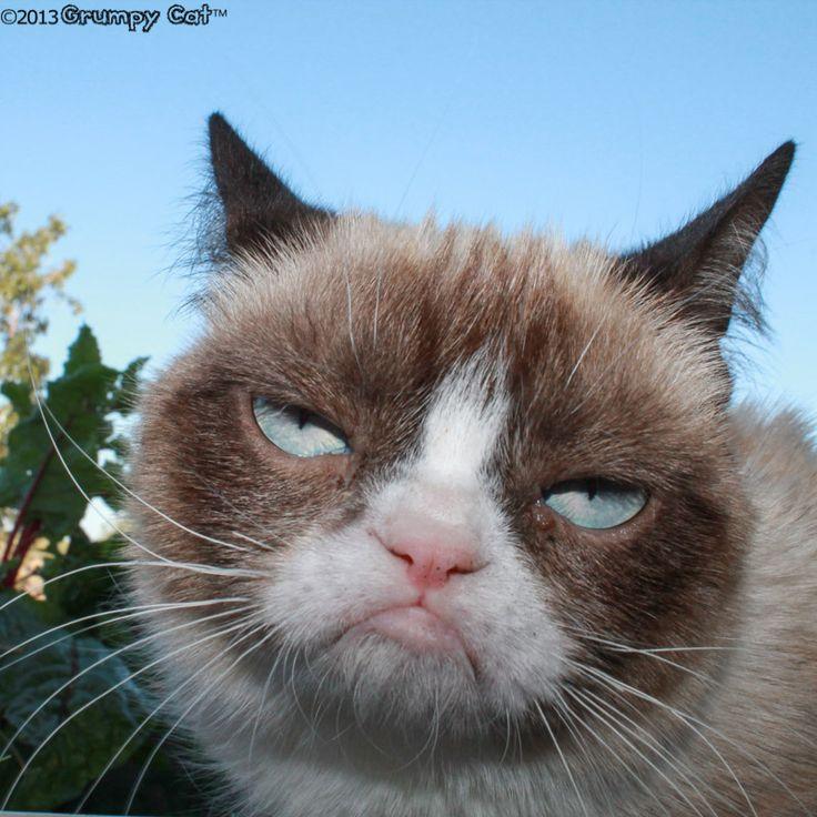 grumpy cat wedding invitations%0A Grumpy cat  See More    Happy Birthday