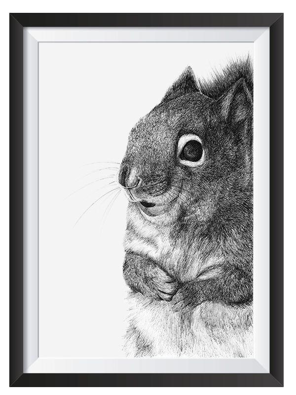 Squirrel illsutrated in with Pen by Nicoll van der Nest