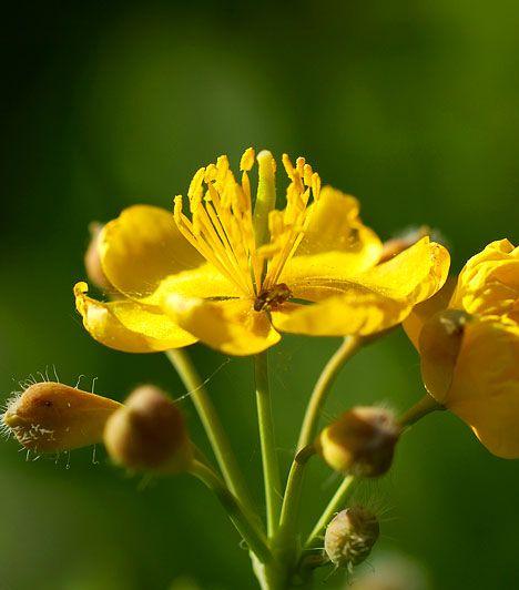 Íme, a legerősebb baktérium- és vírusölő növények | femina.hu