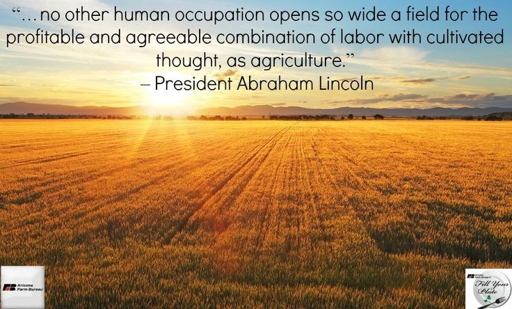 a discussion on the importance of agriculture for society The paper focuses on conservation agriculture  research since that time has documented beyond doubt the importance of  this paper will restrict the discussion.