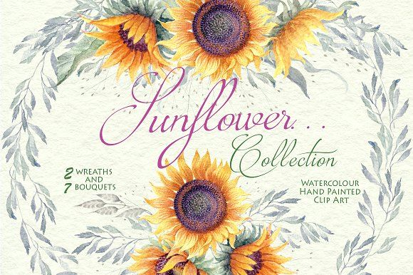 Sunflower... - Clipart Collection by WatercolorSeasons on @creativemarket