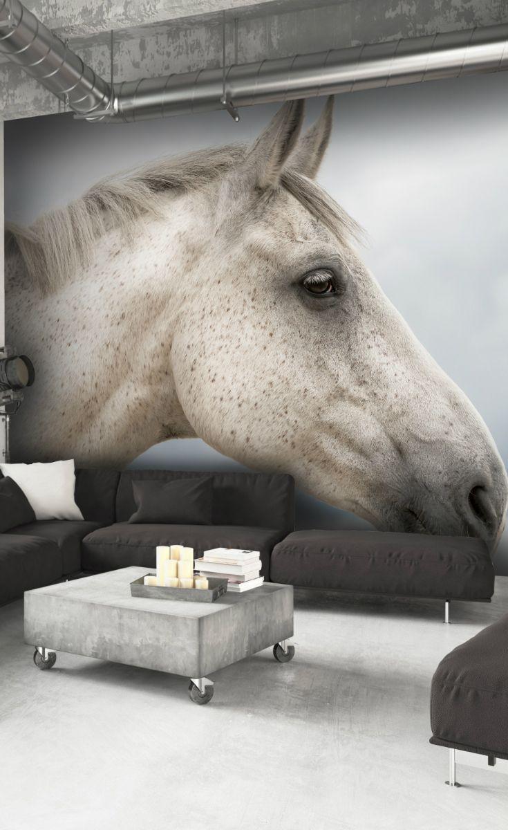 Fantastic Wallpaper Horse Wall - 0a7637b870d60bc916044a46252d1955--wallpaper-murals-wall-murals  Picture_44339.jpg