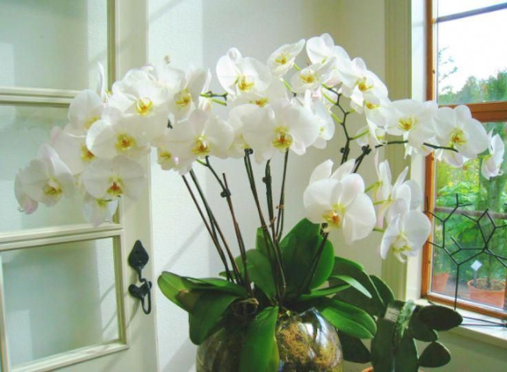 How To Care For Orchids After Blooms Fall Off Orchids Orchids