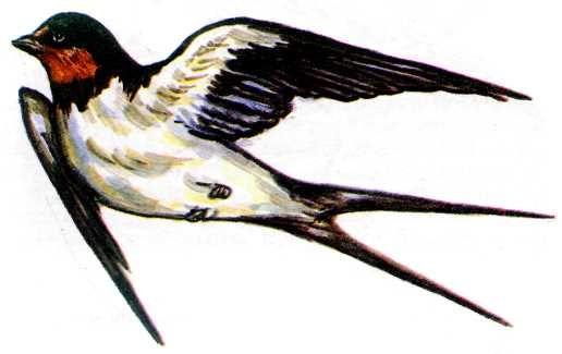 аппликация птица полет: 16 тыс изображений найдено в Яндекс.Картинках