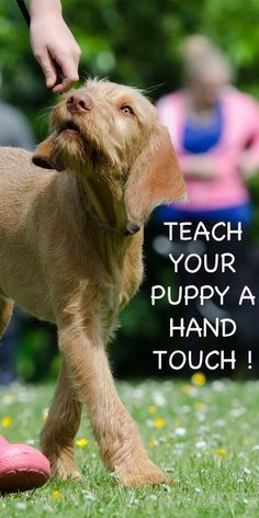 Hand touch is a great and simple way to start target training with your dog