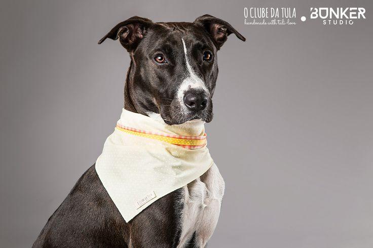 """Pañuelo para perros """"Romantic"""" Dots amarillo, cintas Vichy y pintitas, 100% algodón... Una monada creada por O Clube da Tula. http://oclubedatula.com/es/produtos/item/panuelo-romantic-dots-amarillo-cinta-vichy-rosa-cinta-pintitas-amarilla/"""