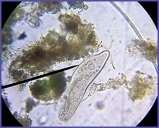 17 Best images about Adventure under Microscope on Pinterest