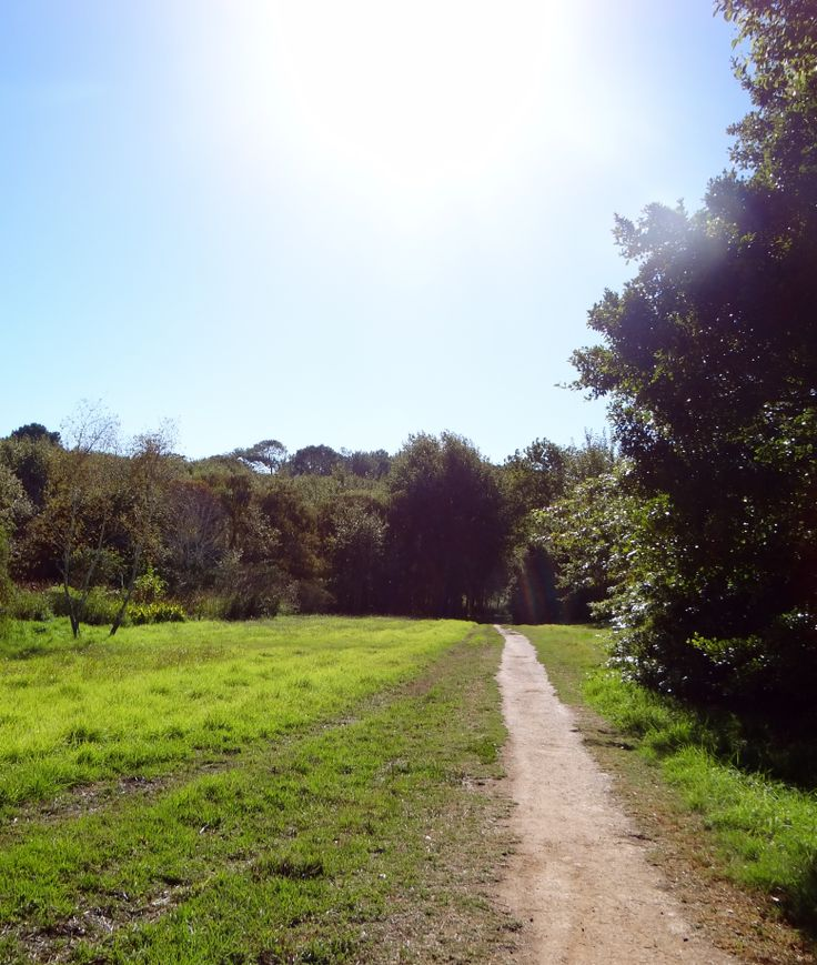 Constantia residents are lucky to have nature on their doorstep. Enjoy an afternoon stroll on one of the many green belt pathways.