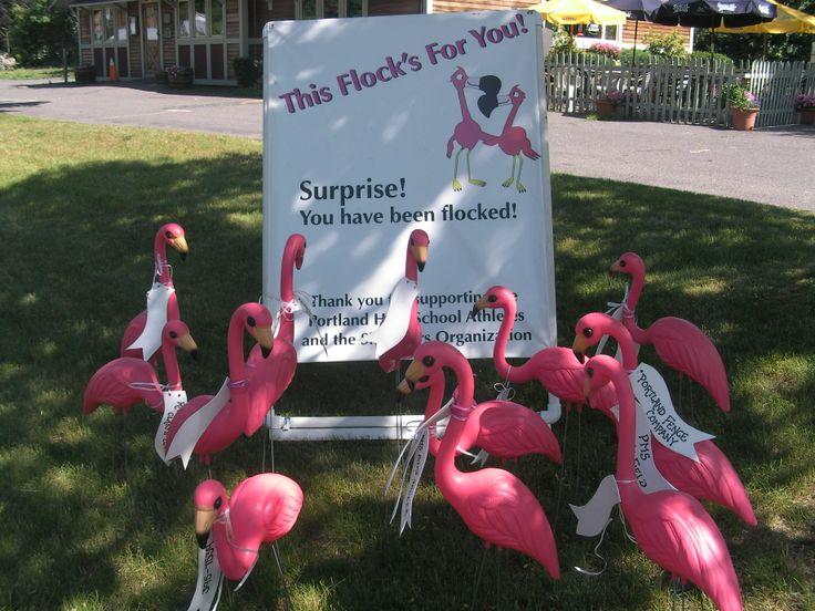 flamingo fundraiser letter