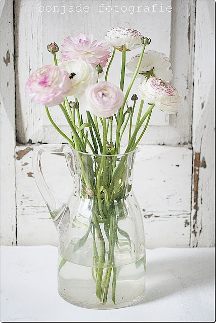 Love the simplicity and soft colours. Ranunculus, clear glass vase and shabby chic background.