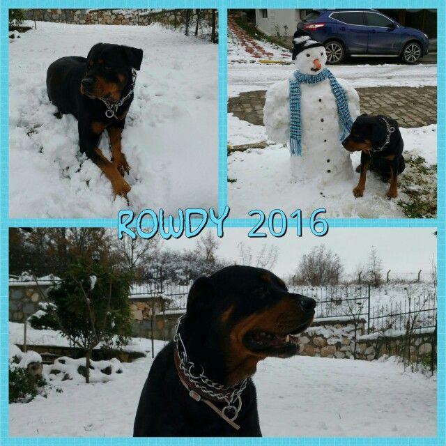 Canım kızım Rowdy  2016 ilk günleri kar hatırası  #rowdy #köpek #rotweiler @yesimdygl @egedayioglu