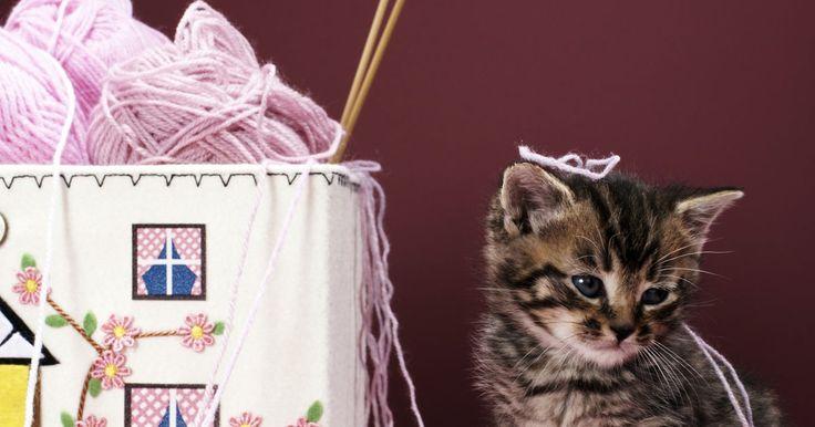 Como tirar o cheiro de urina de gato seca de tapetes. A tática para a remoção do cheiro de urina de gato seca de tapetes é diferente da usada para limpar a urina ainda úmida. Quando fresca, a urina do gato é ácida, com pouco odor. Mas quando seca, transforma-se em sais alcalinos, criando um ótimo ambiente para a proliferação de bactérias malcheirosas. Se o seu tapete é lavável, será possível remover ...