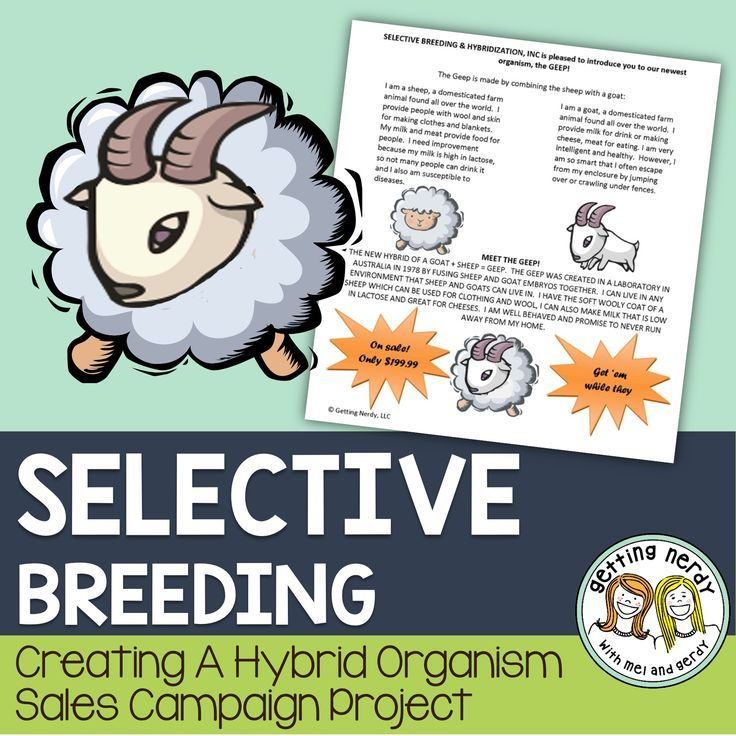 "Selective Breeding and Hybrid Project - Genetics Hybridization Sales Campaign.  In this Genetics research project, students will act as employees of Selective Breeding and Hybridization Inc, and are required to create an Ad Campaign for a new line of ""hybridized"" organisms."
