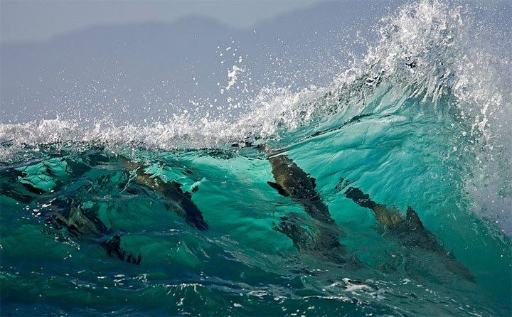 Freedom...: Don T Call, Michael Policy, Animals, Posts, Ocean, Beautiful Photography