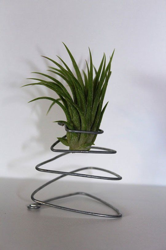 38 best images about air plants on pinterest air plant for Air plant art