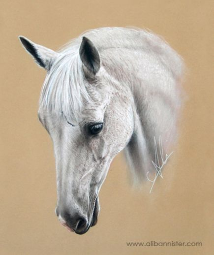 WILMA, pastel on pastel card by Ali Bannister. For limited edition prints and information on commissions see: www.alibannister.com