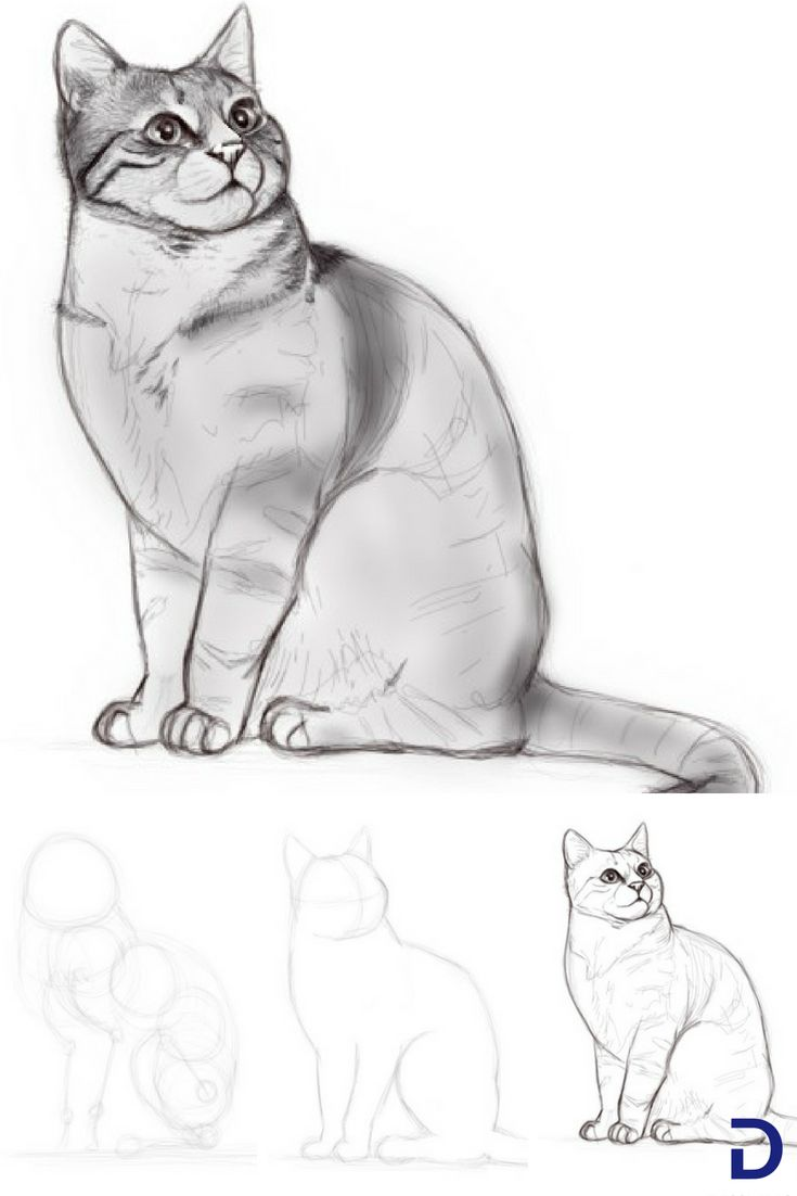 Comment dessiner un chat dessin drawings sketches et digital art - Comment dessiner un ane facilement ...