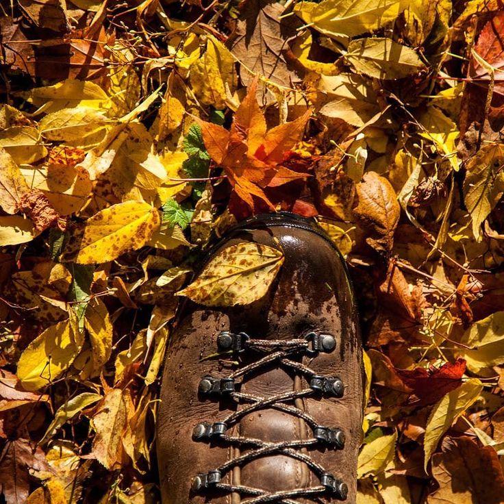 Goodbye autumn